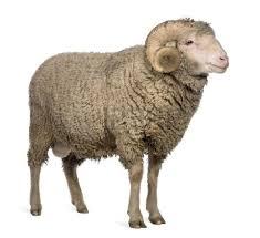 Merino Wool Supplier